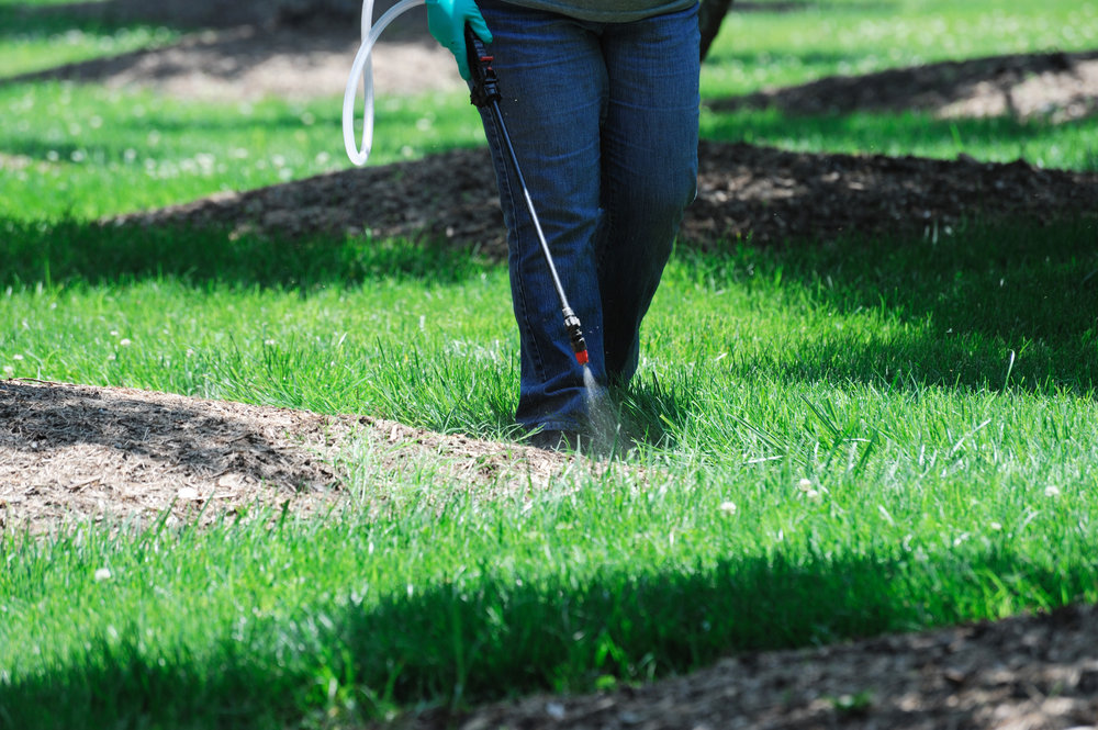 3 Things You Need to Know About Fishkill, NY Lawn Fungus Treatment
