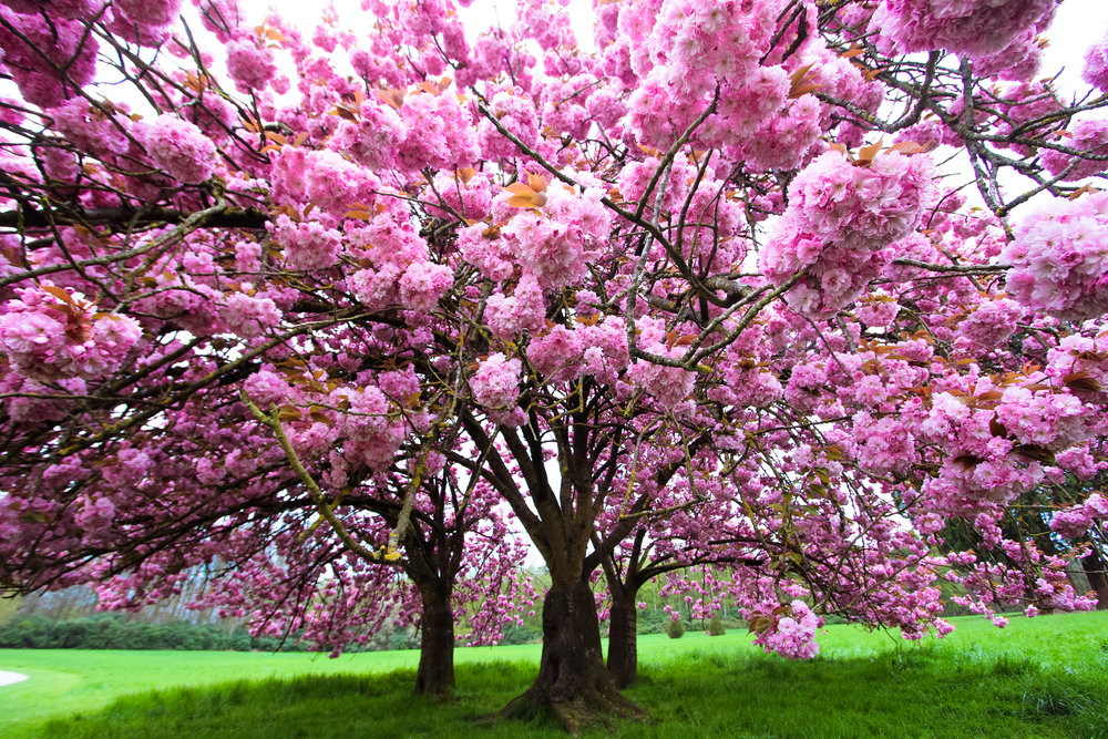 Why Is Early Spring the Perfect Time for Tree Service in Westchester County, NY?