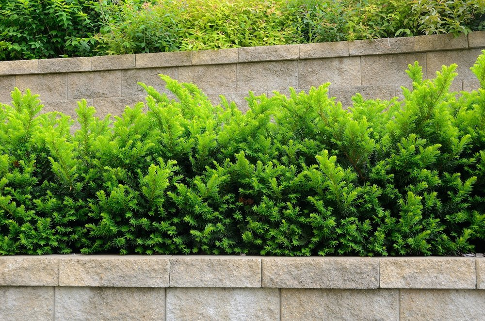 Commercial landscaping in Dutchess County, NY