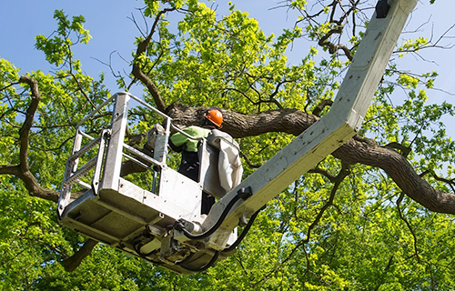 0 commercial tree work.png