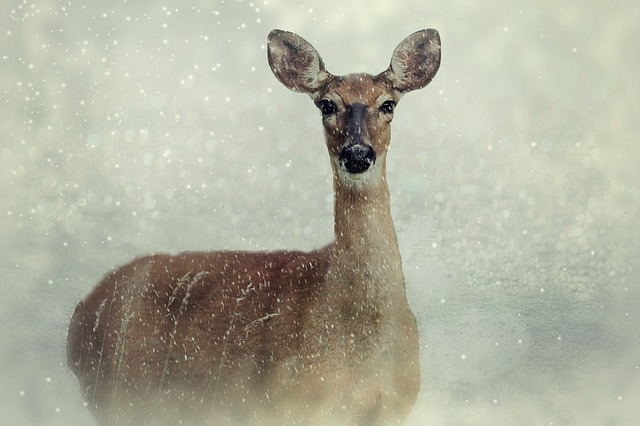 Pesky snowflakes clamp down on a deer's freedom of speech. From pixabay.com