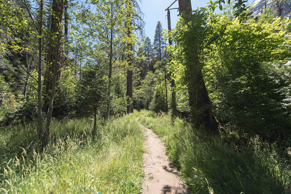 follow the path.jpg