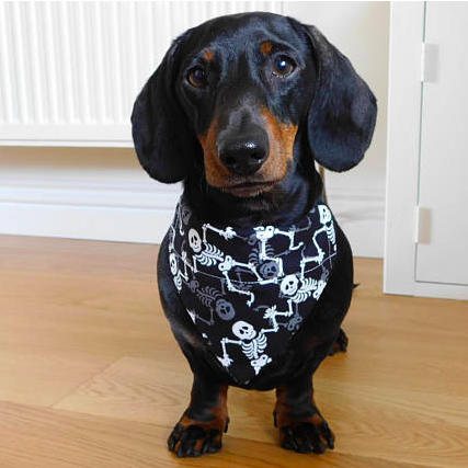 LB - Image - Horror Lounge - Merch - Dog scarf.png