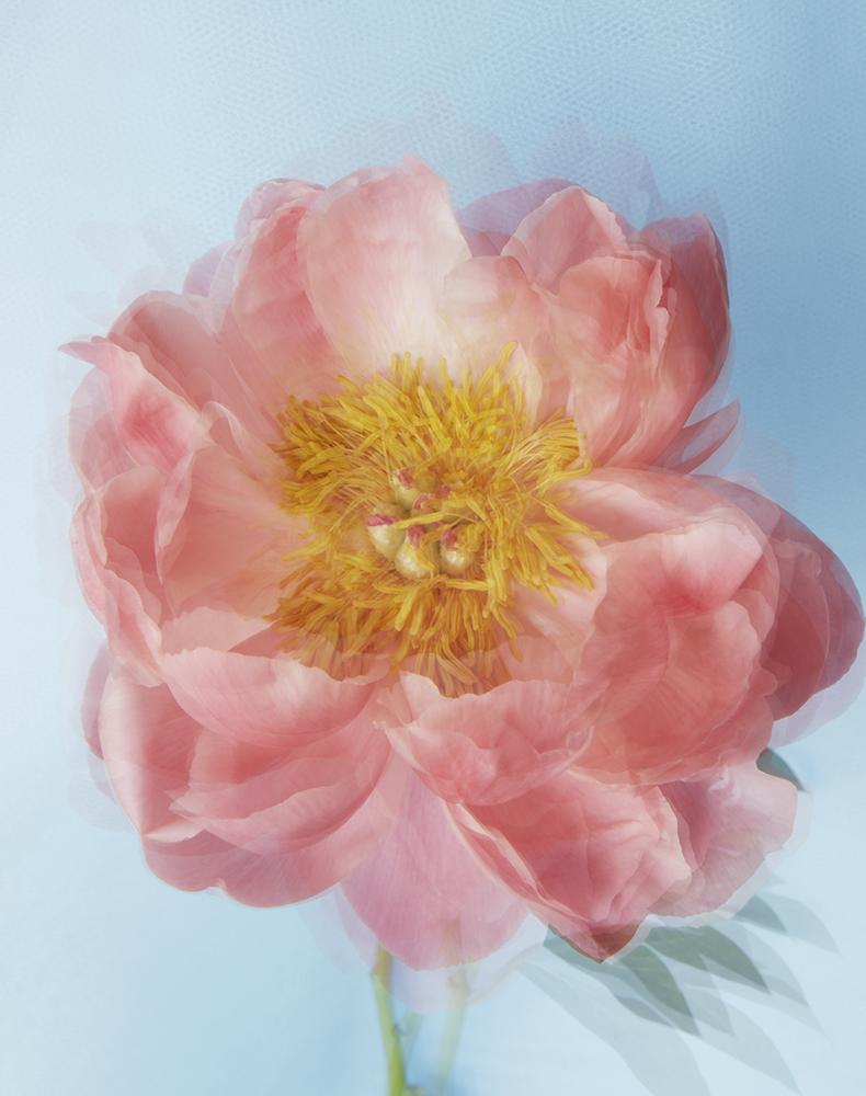 CP_Flowers-020.jpg