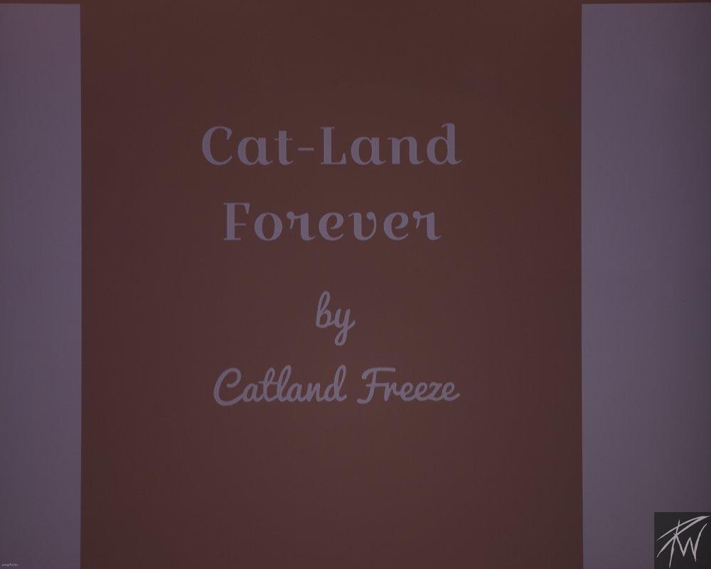 Cat-Land Forever
