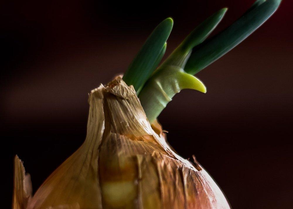 oniontop.jpg
