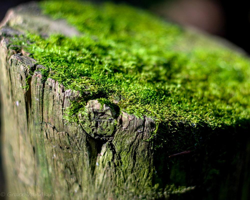 Steep Rock-11.jpg