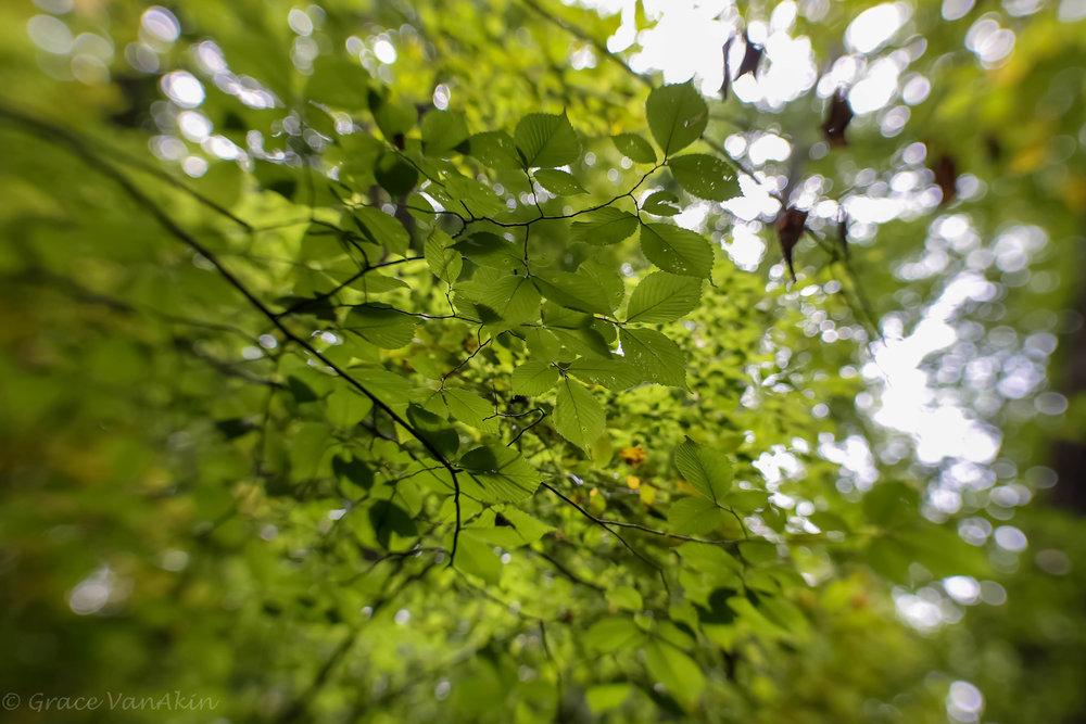 Leafy View.jpg