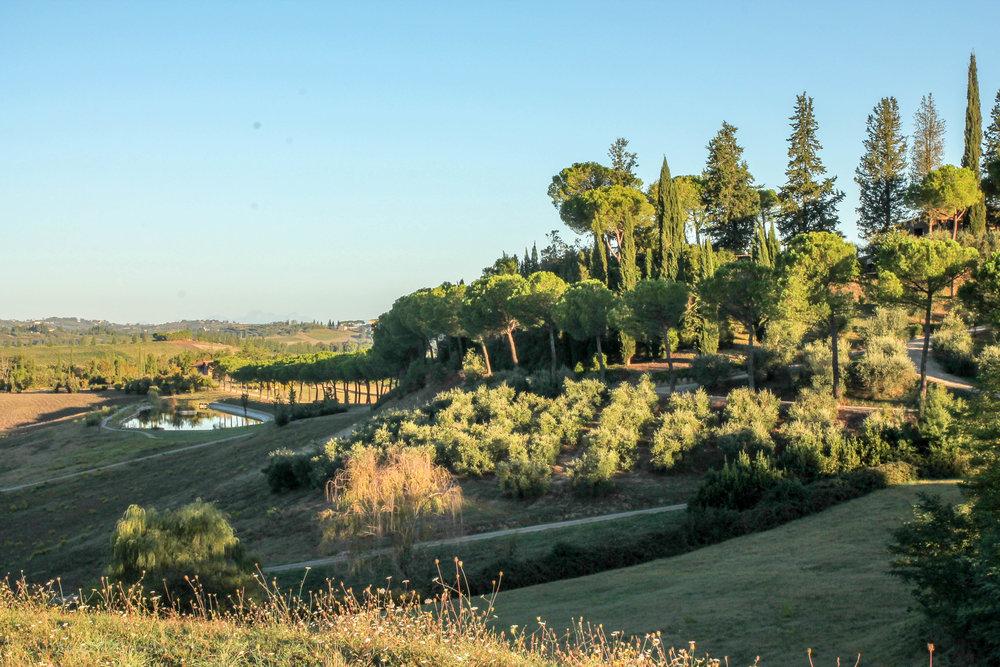 Tuscany (28 of 88).jpg