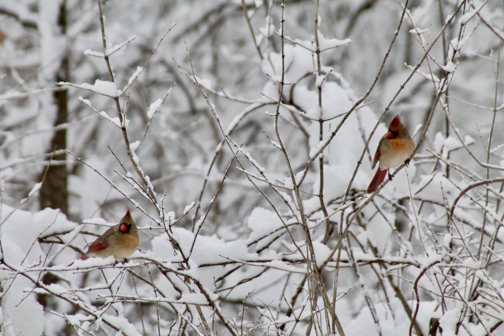 - In winter,all the singing is inthe tops of the trees.~ Mary Oliver
