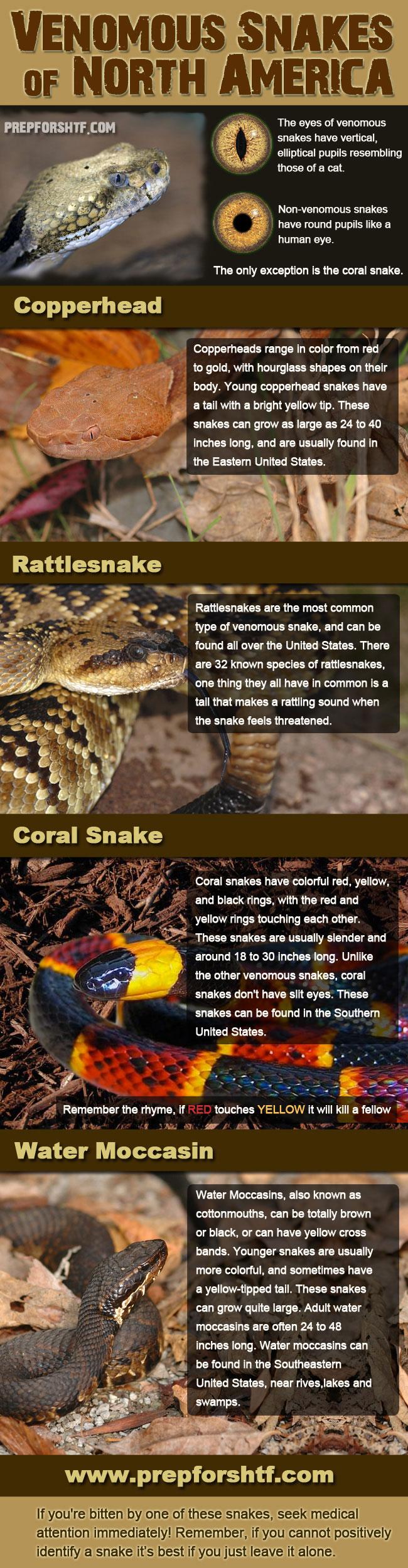 41318-snakes.jpg