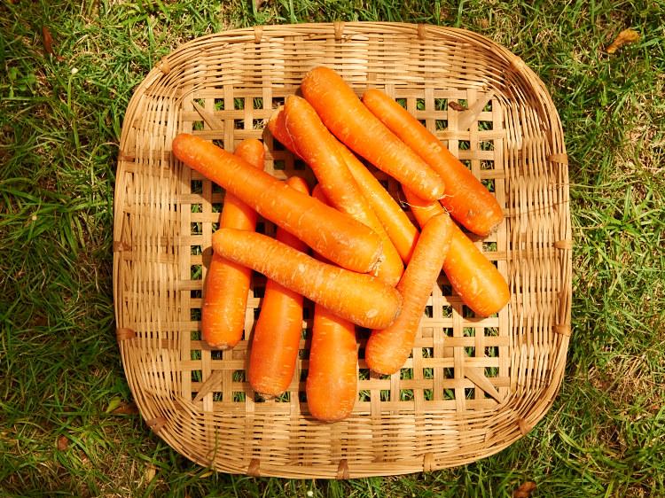 AATD_Carrots_015.jpg