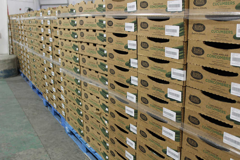 RedHat English long cucumbers ready to be shipped out to stores across western Canada. PHOTO: Aasa Marshall