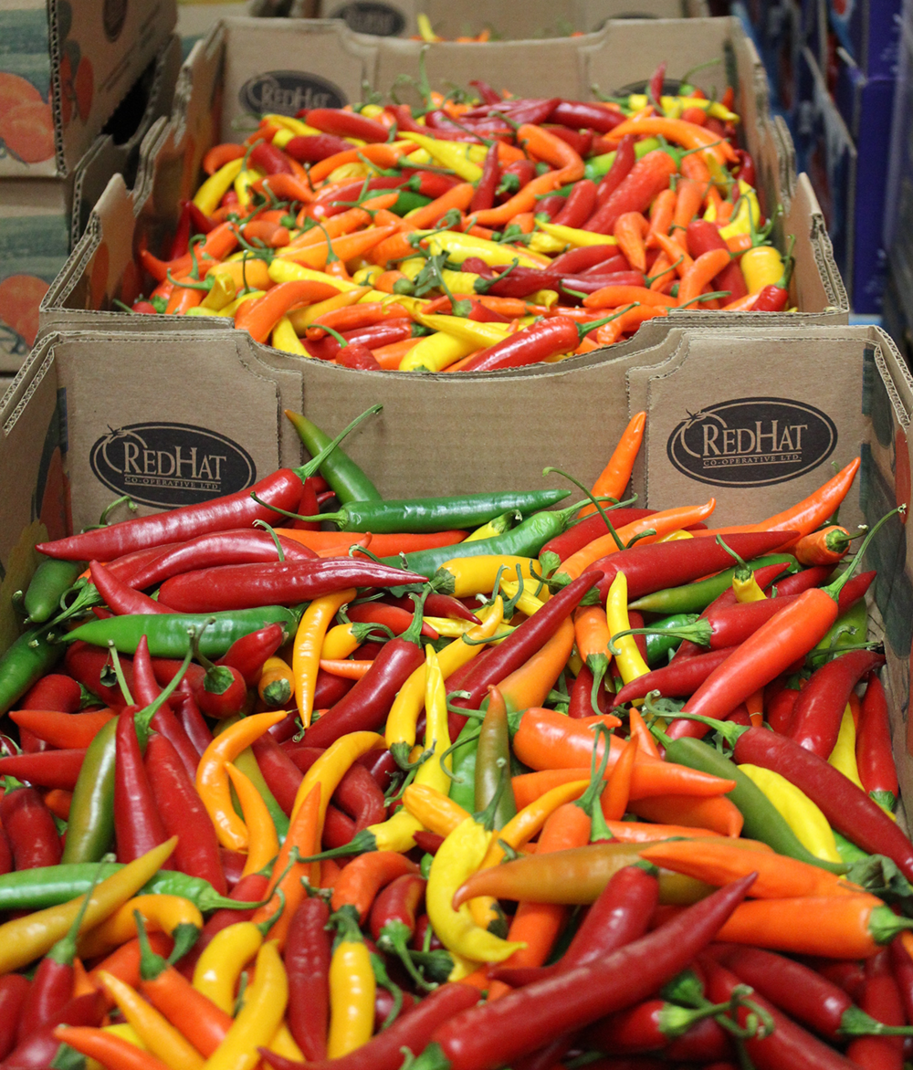 Fresh RedHat peppers sorted and weighed for transport. PHOTO: Aasa Marshall