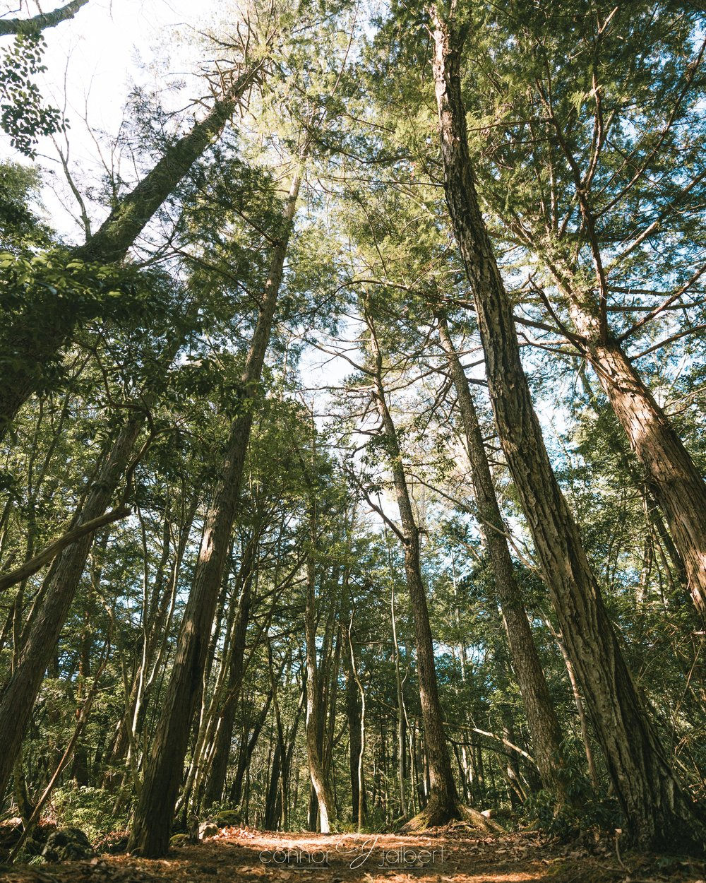 Sea of Trees