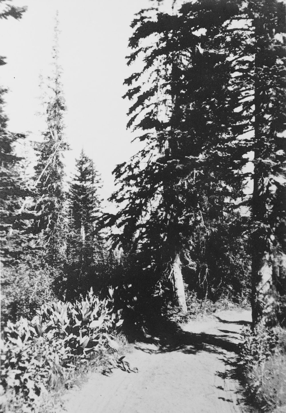 BigCottonwood History  16690.jpg