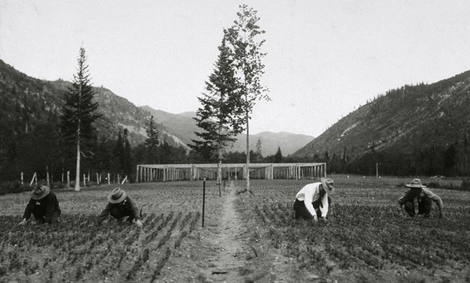 Wasatch Nursery 1906-1920.jpg