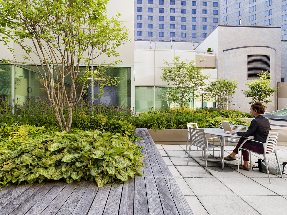 Recover-Green-Roofs-0016.jpg