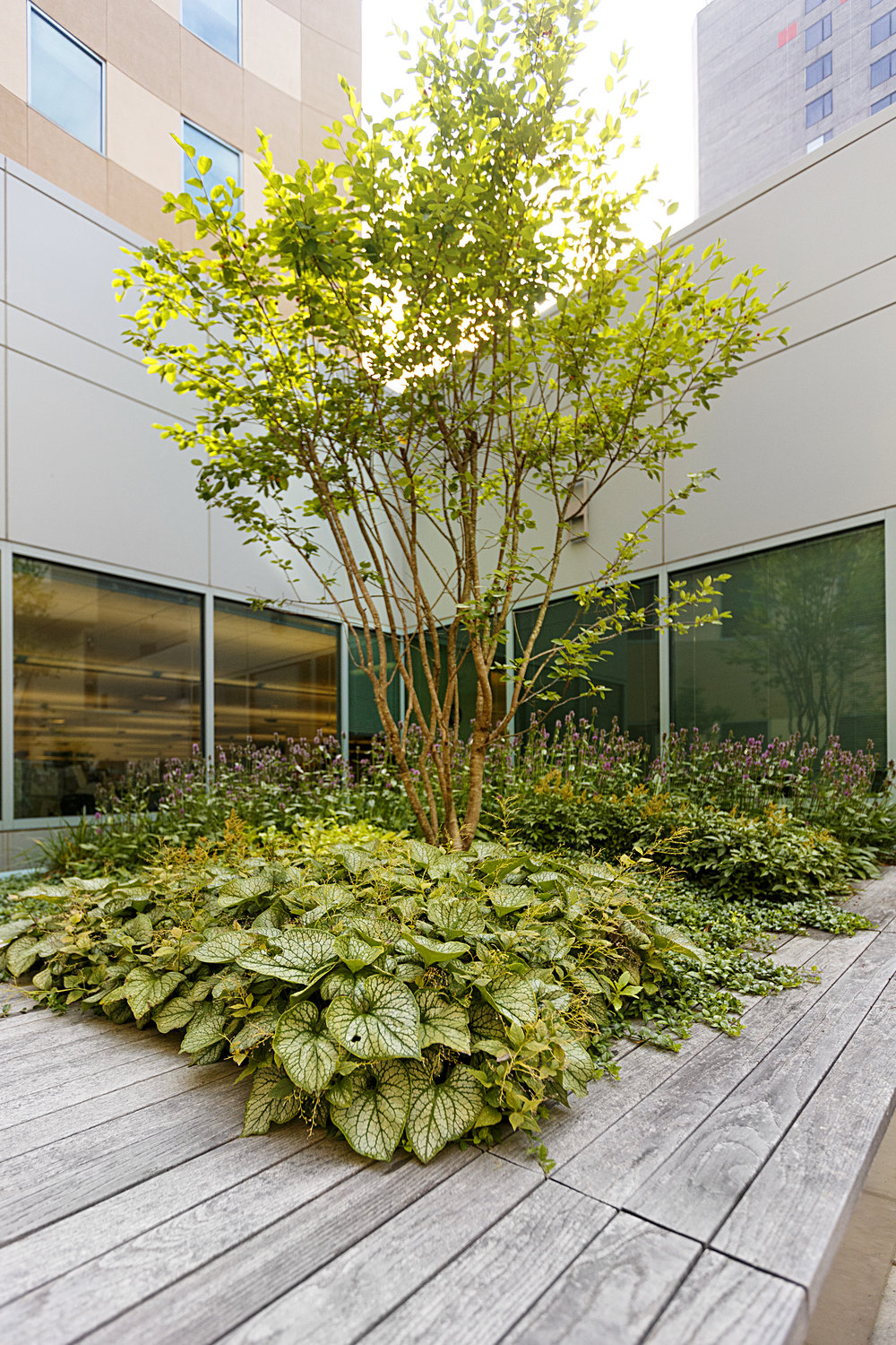 Recover-Green-Roofs-0030.jpg