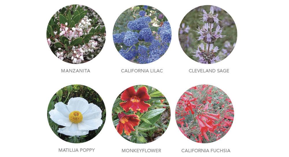 circleflowers.jpg