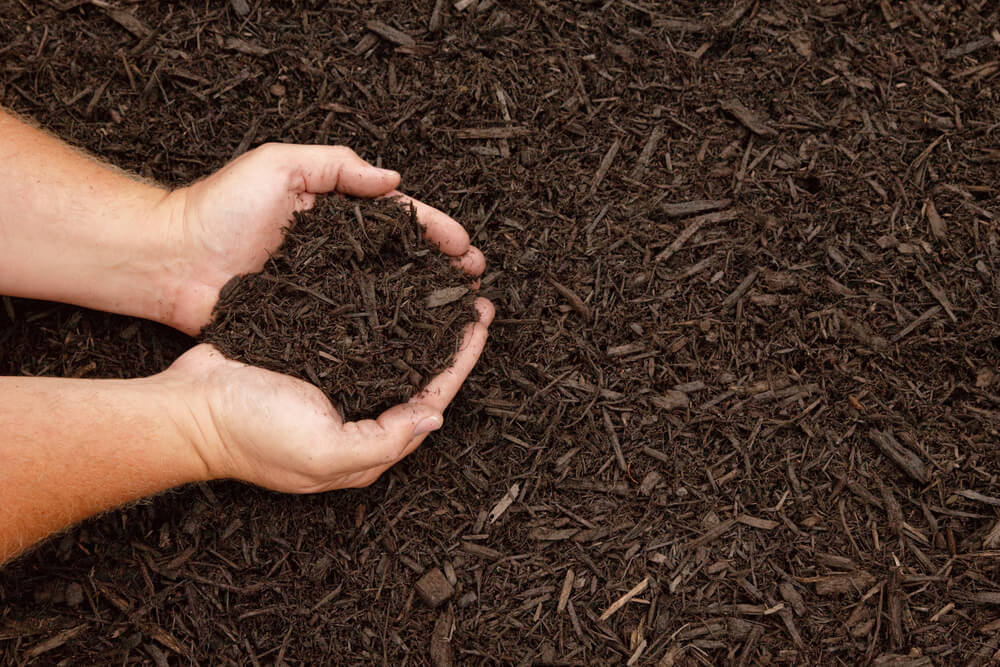 Photo of two hands holding freshly placed mulch