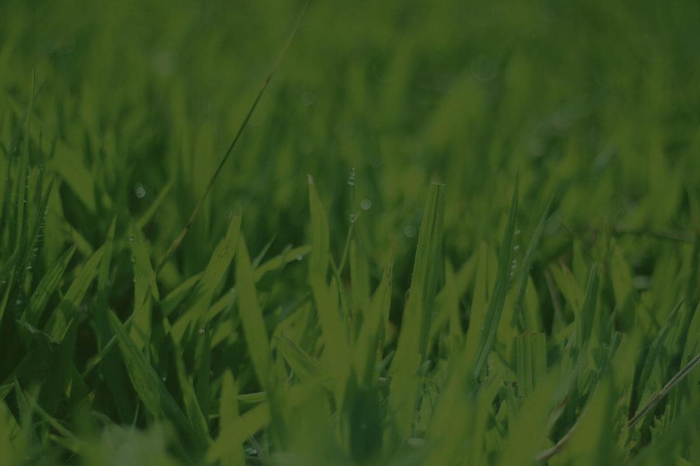 music-city-lawncare-grass-yard.jpg