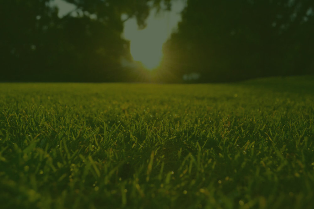music-city-lawncare-sunrise-lawn.jpg