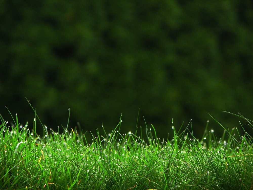 Grass_HD_wallpaper.jpg