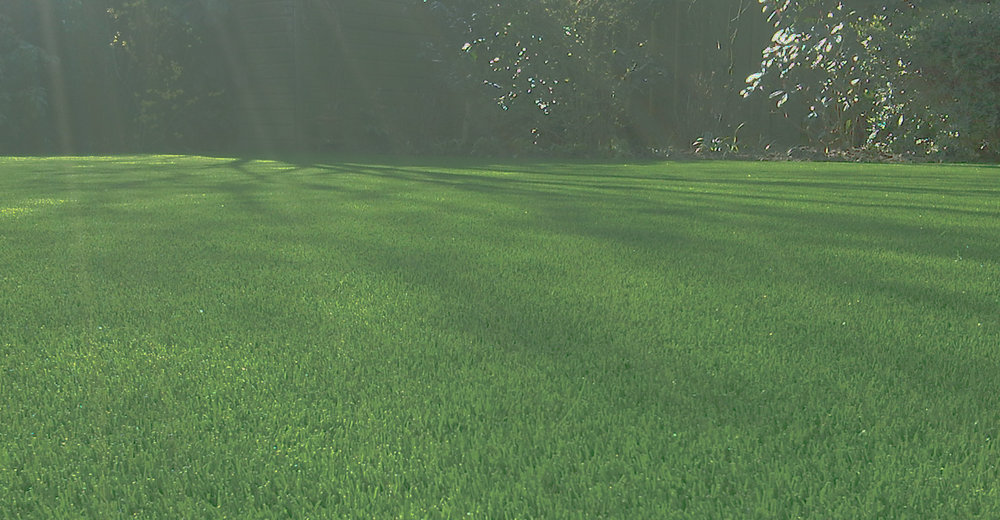 artificial-grass-2.jpg