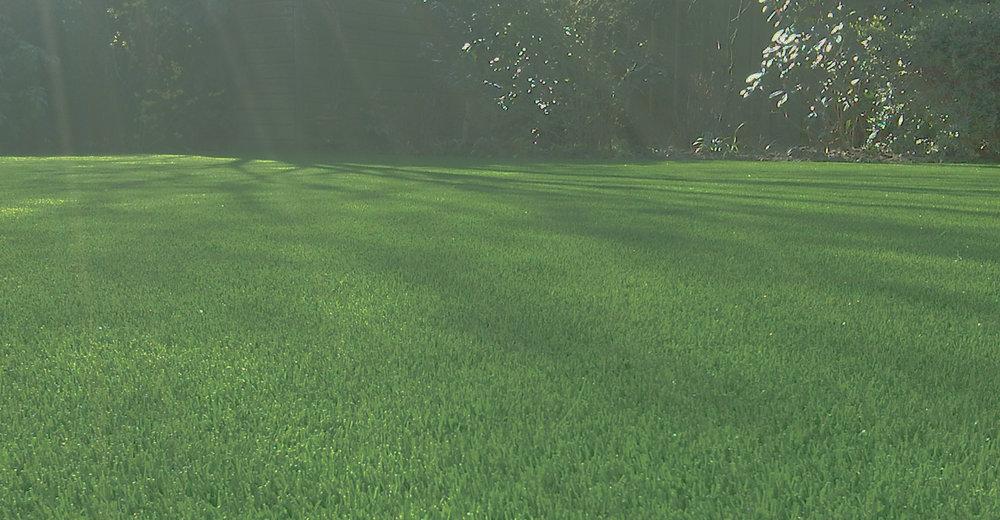 artificial-grass-2.jpg