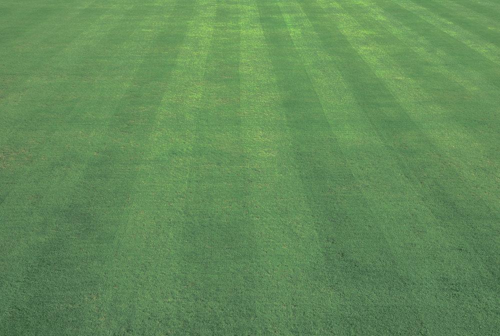 grass_texture241-2.jpg