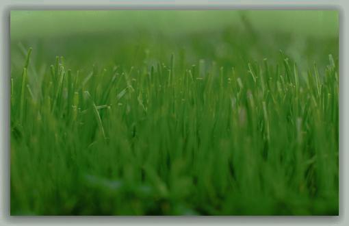 lawn-t2-2.jpg