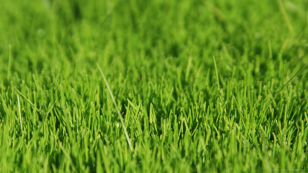 green-grass.jpg