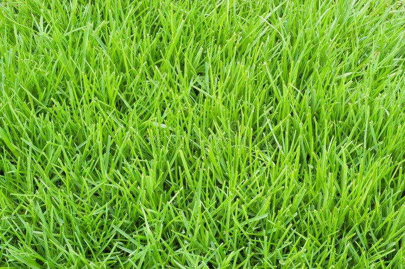 poa-annua-grass-4951480.jpg