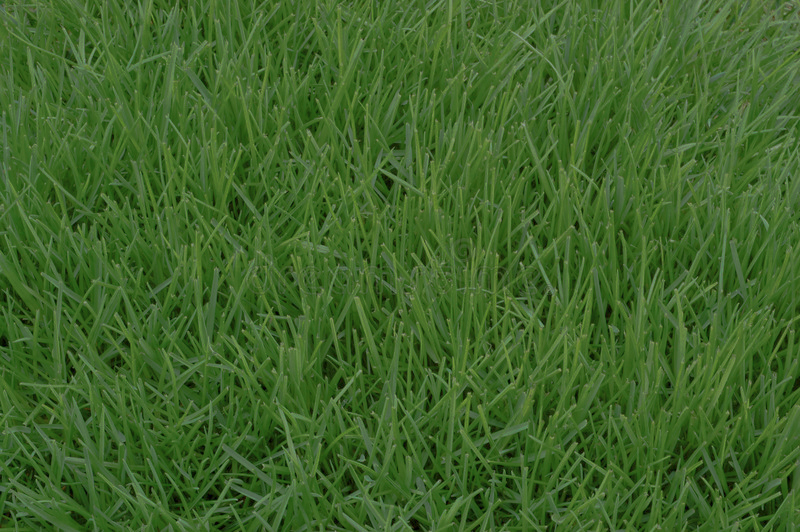 poa-annua-grass-4951480-2.jpg