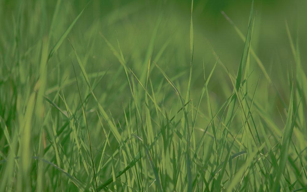 spring_grass_wallpaper_pack_by_ythor-2.jpg