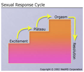 sexual-response-cycle.jpg