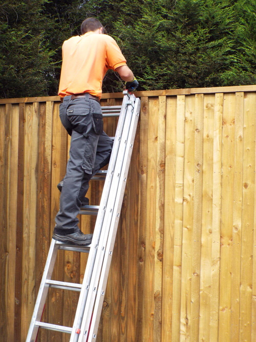 Man on a ladder installing a new garden fence
