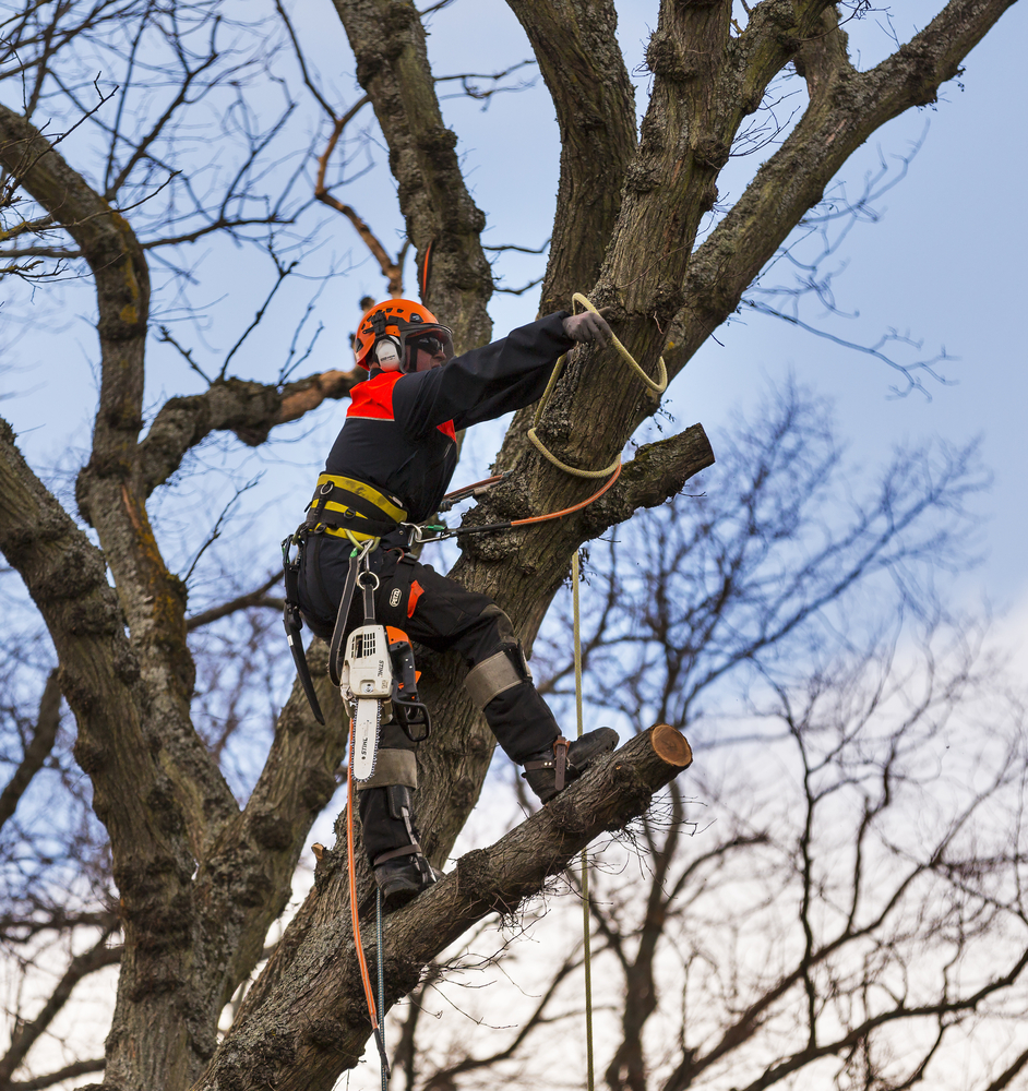 Man carrying out tree surgery with harness on