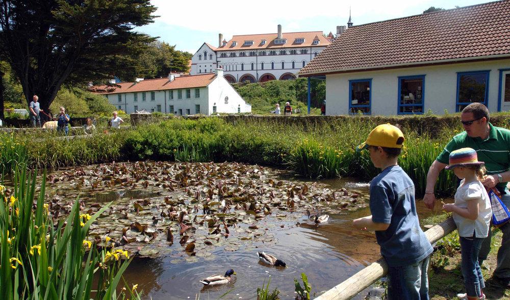 Caldey Abbey and ducks 2.jpg