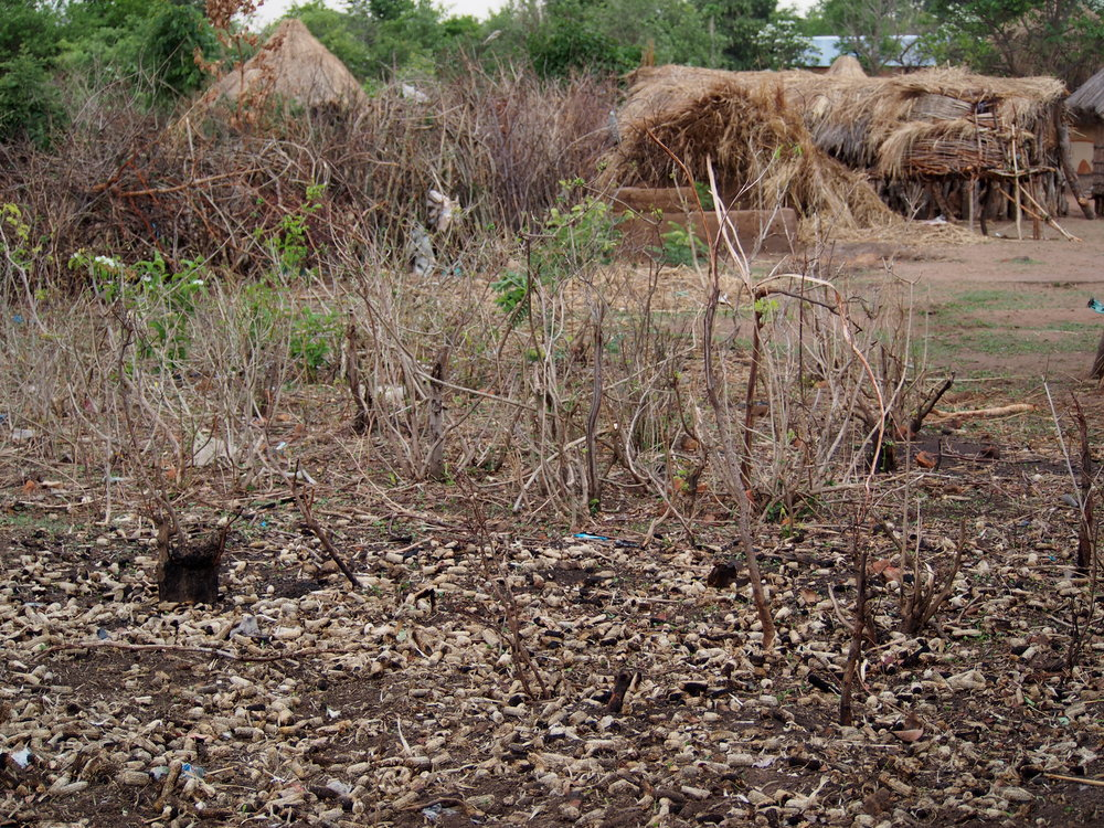 The households that received the improved cookstoves are using twigs and corn cobs lying around and lots of small shrubs and brush they now harvest.