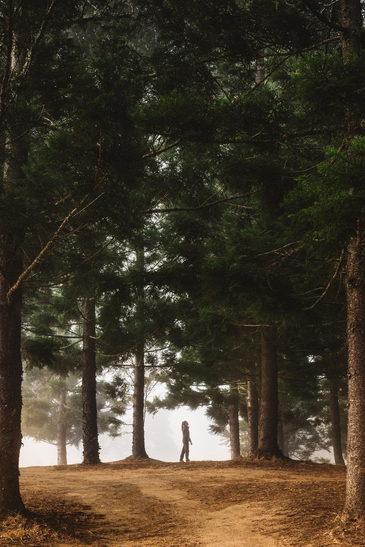 Crams Farm Pine Forst.jpg