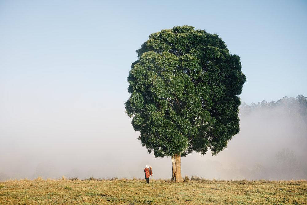 Fog & Tree.jpg