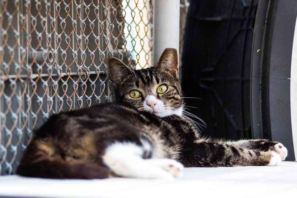 Adoptable cats in Fort Lauderdale
