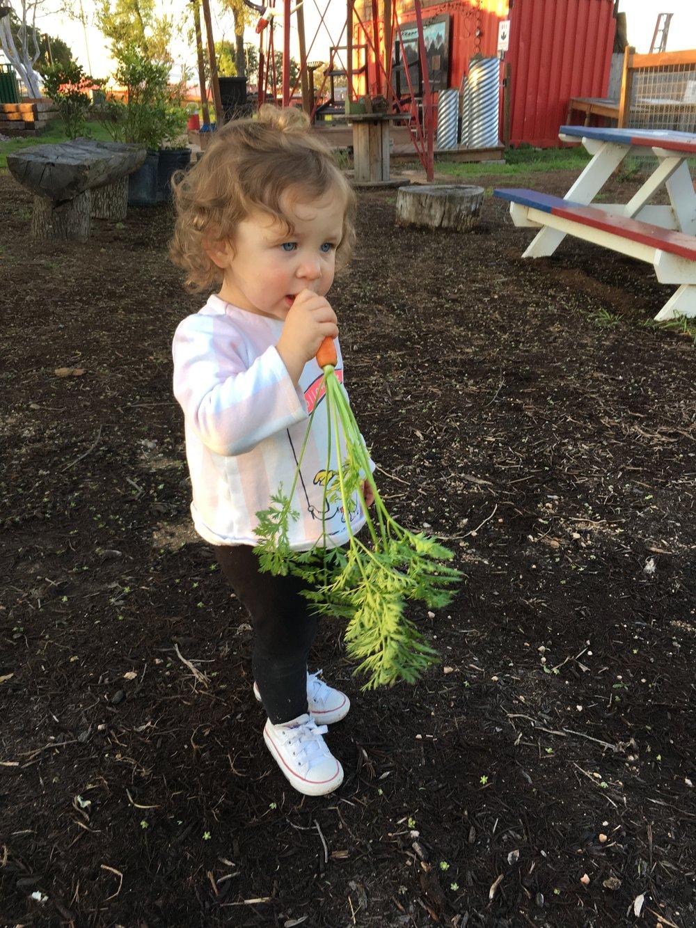 Truma eatin a carrot she harvested