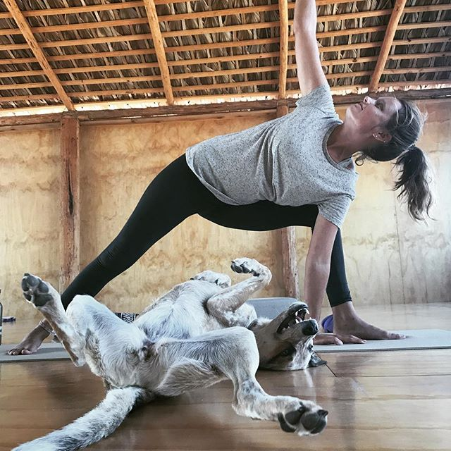 Another version of upward facing dog @yandarayoga - Thank you Loka for this wonderful performance. 🙏🐶❤️
