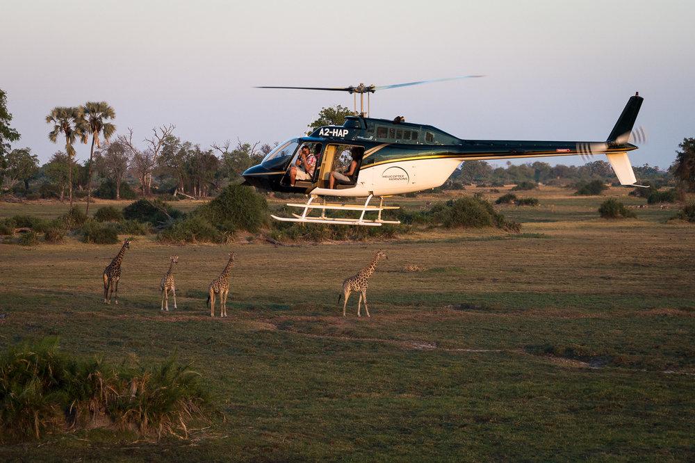 Safari en hélicoptère -