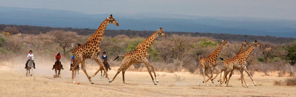 Safari à dos de cheval -
