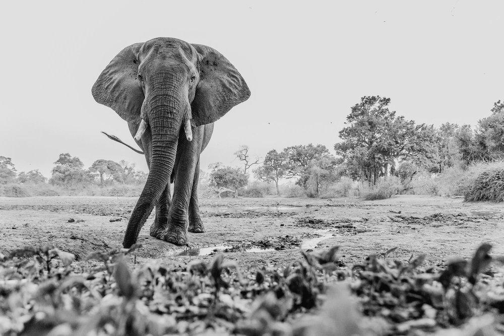 14mm-Elephant.jpg