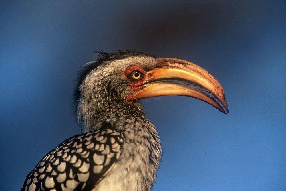 OBSERVATION D'OISEAUX - La saison de février à avril, est excellente pour l'observation des oiseaux.
